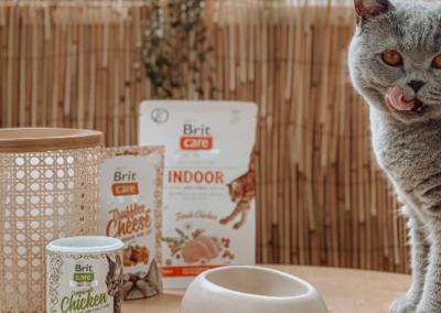 Nano Influencer:innen für Brit Care Cat